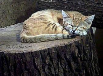 Sleeping by Scheron