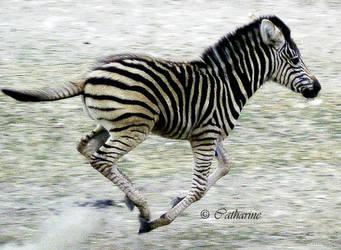 Stripe by Scheron