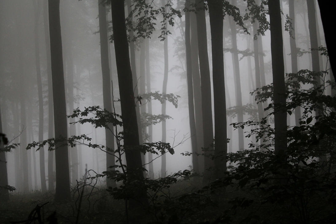Misty wood 03 by Scheron