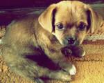 doggie by alexandra-maria