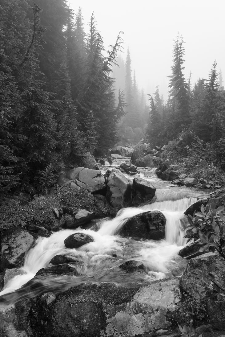 Foggy Stream by TomGreenPhotos