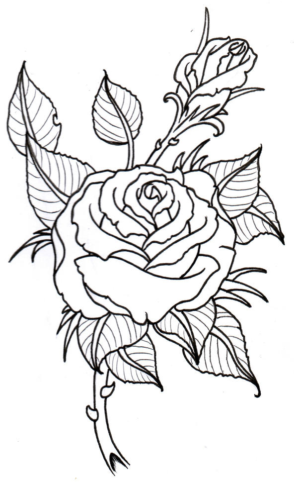 Tattoo Line Drawing Books : Rose outline by vikingtattoo on deviantart