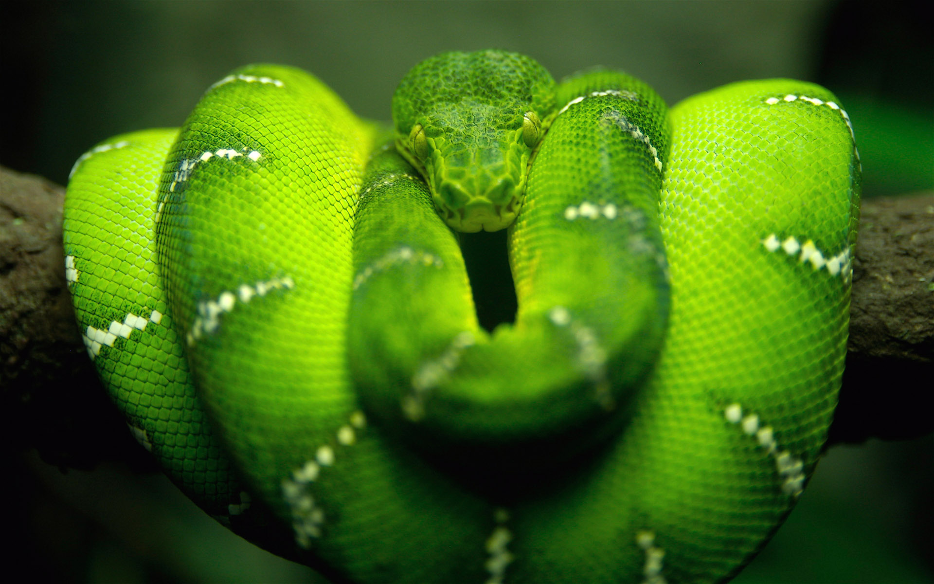 National Geographics: green snake pictures