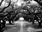 New Orleans - Oaks