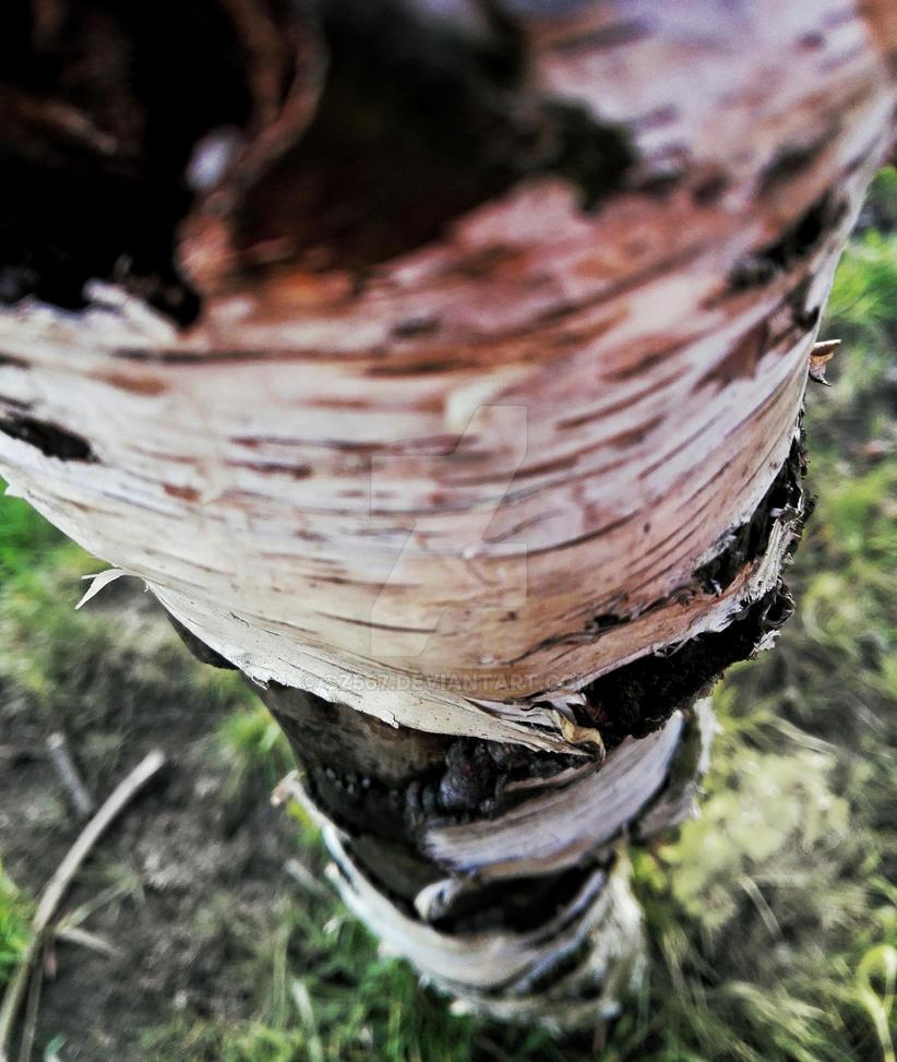 tree by Sz567