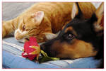 'cat, dog and rose'