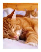'Sleeping'
