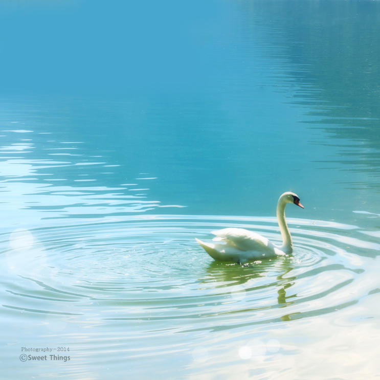 swan .. by ST-ST