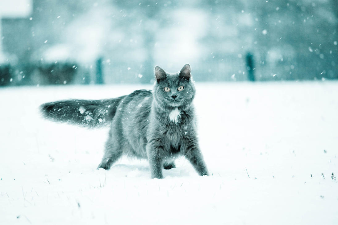 Celeste sous la neige by chris-anthem