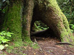 Tree Hollow 3 by xxReaperStock