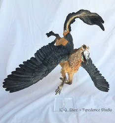 Bearded Vulture Hippogryph