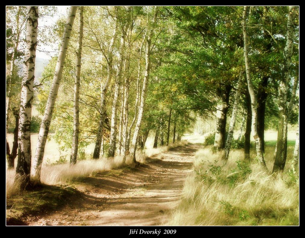 Birch Tree Poetry by Pixx-73