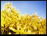 Yellow Flood