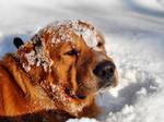 Winter Sun-bath