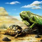 Iguana and Turtle