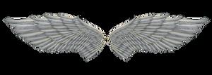 angel wings 01