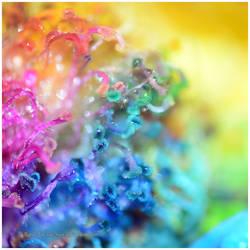 .:Rainbow:. by Battle-for-the-Sun
