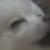 Gabe the Dog - Suspicious look (F2U)