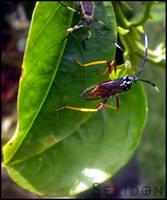Squash Bugs by Seridon