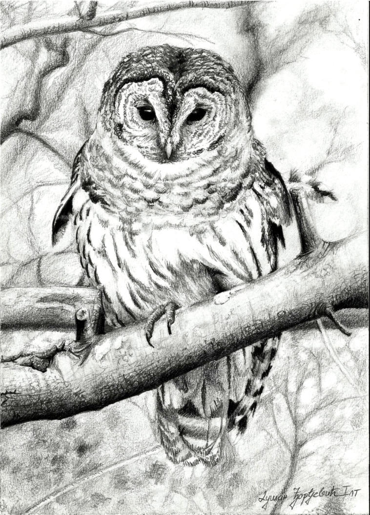 Bird of Wisdom by BannanaPower