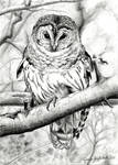 Bird of Wisdom