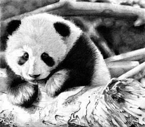Baby Panda by VixenArtz