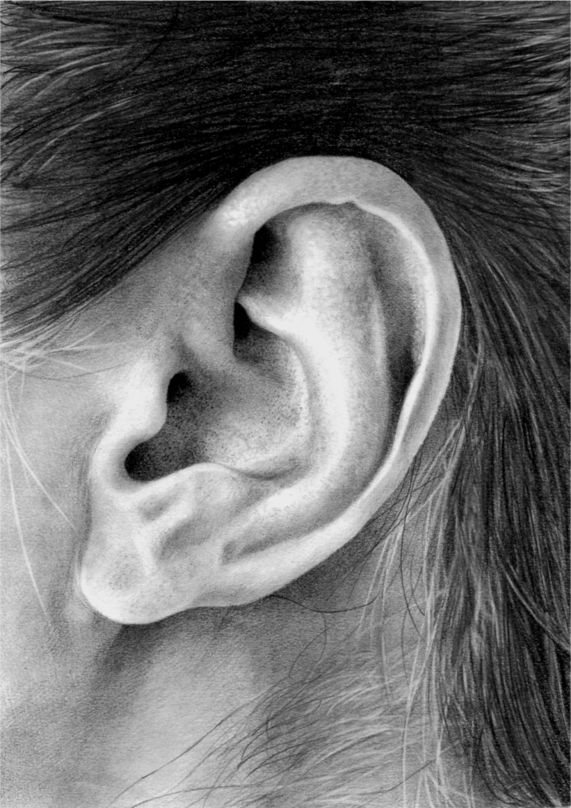 Ear study by BannanaPower on DeviantArt