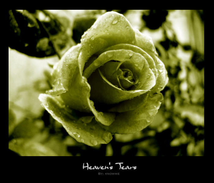 Heaven's Tears by knOwme