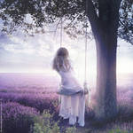 Lavender Field by ForestGirl