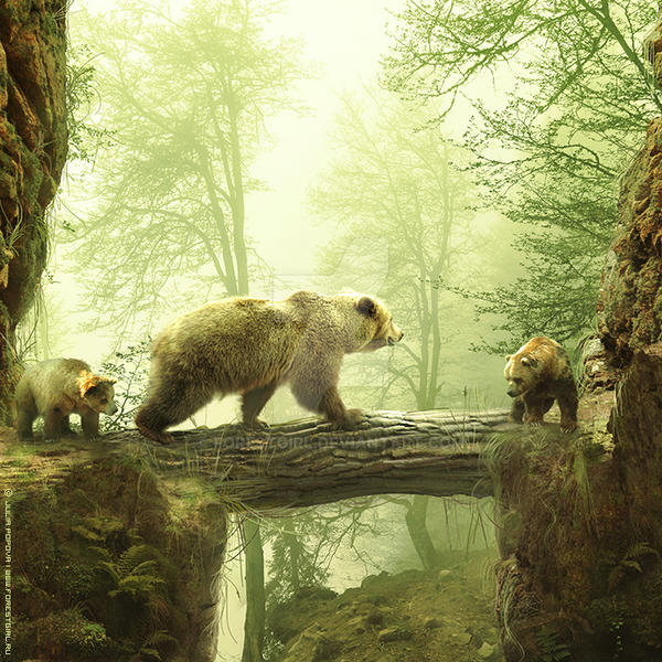 Bears by ForestGirl