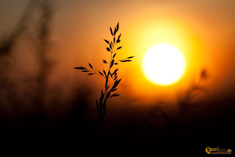 Sun's rising II by narisign