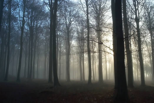 STOCK Foggy forest
