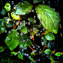 Droplets on a web