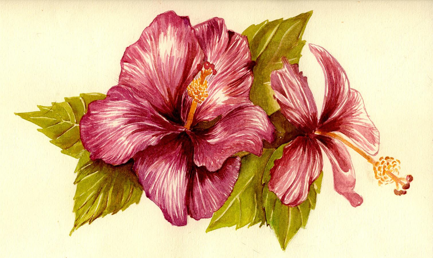 Hibiscus Flower By Gloriana On Deviantart