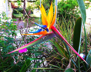 Bird of Paradise by Dont-Confess-Please