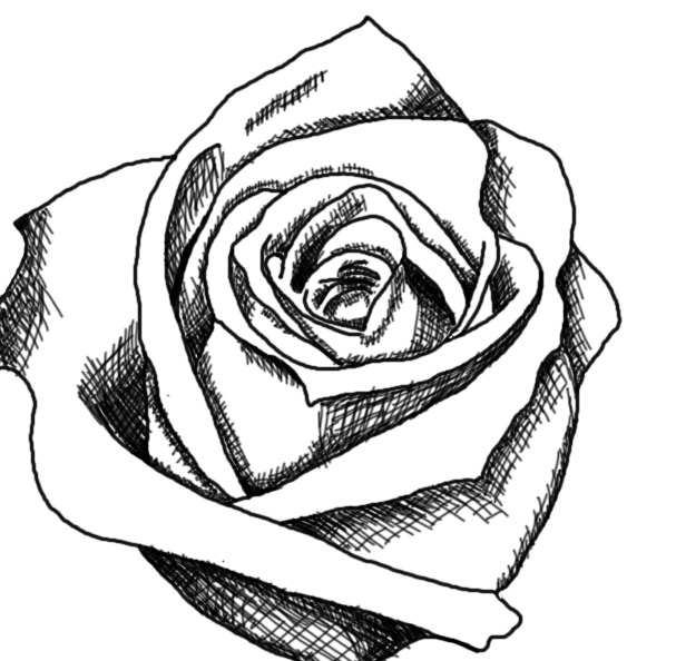 Black and white rose by mauls sweetheart