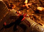 wings of ladybug