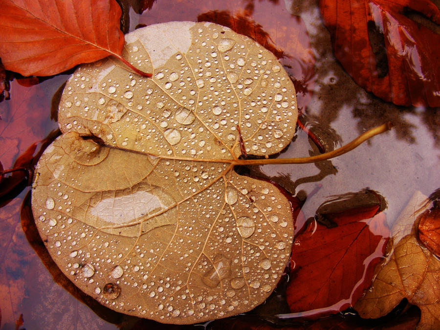 leaf on water and water drops