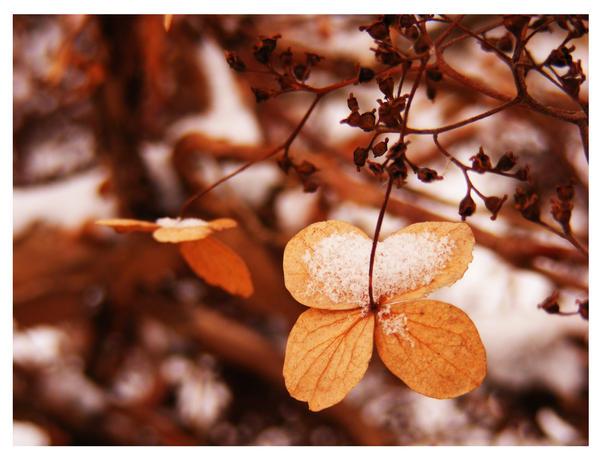 تصميمي ضياء plants_colored_in_br