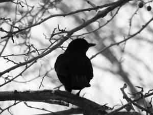 bird in a tree II