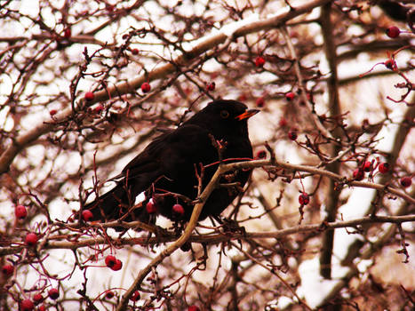bird in a tree IV