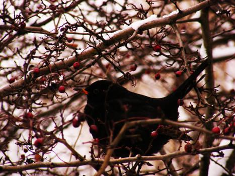 bird in a tree III