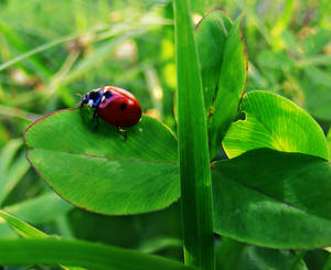 life of the lady bug