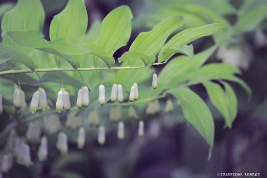 beautifull flowers