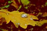 macro in autumn