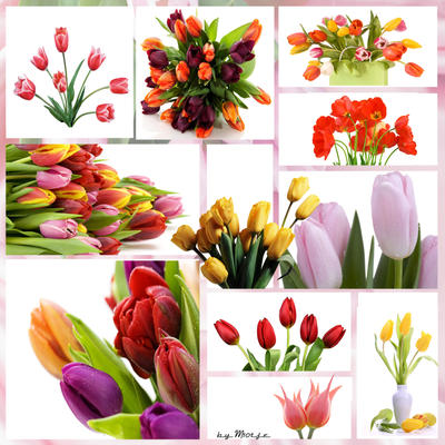 Tulip Collection by M10tje