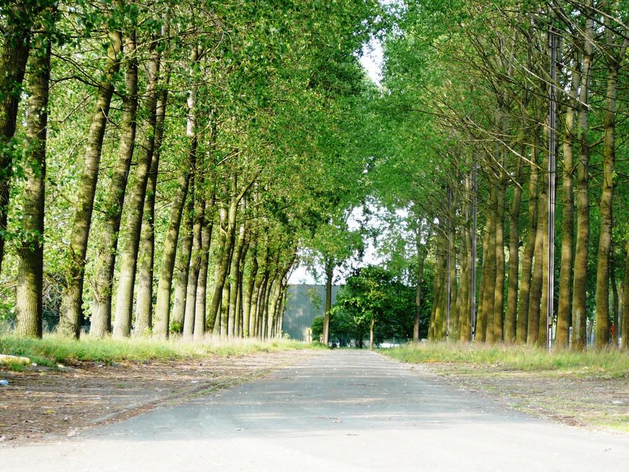 Path by M10tje