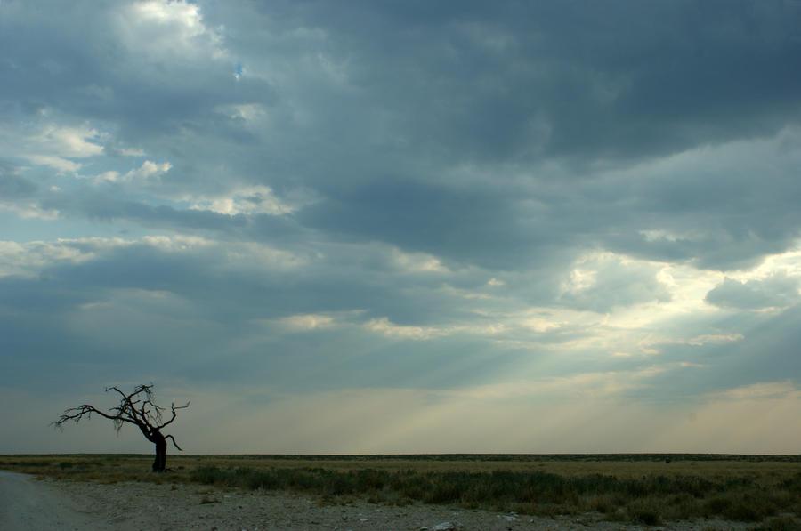 Etosha, Namibia by M10tje