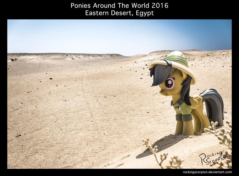 Ponies Around The World 2016: Eastern Desert Egypt