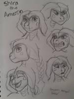 Shira dinosaur study sketches
